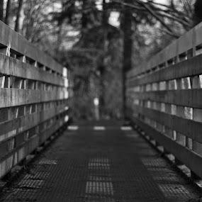 by Mark Niehe - City,  Street & Park  City Parks