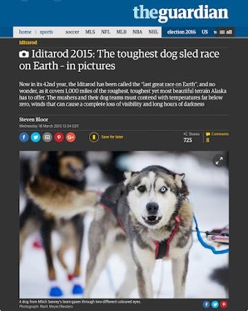 the Iditarod