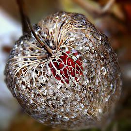 Morning Brilliants by Marija Jilek - Nature Up Close Other plants