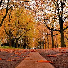 empty road by Abhinav Ganorkar - Transportation Roads ( jungle, autumn, parks, roadside, roads,  )