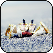 Crab Wallpapers APK for Bluestacks