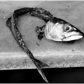 head and bones by Atle Bogen - Animals Fish ( black and white, bones, fish, mackerel, head, dead )