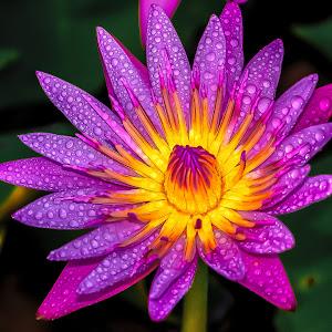 flower (1 of 1)-21.JPG