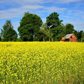 by Eugenija Seinauskiene - Landscapes Prairies, Meadows & Fields