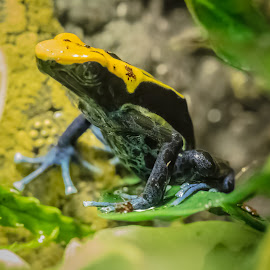 by Chris Knowles - Animals Amphibians