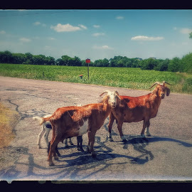 Family outing by Aaron Buck - Animals Other Mammals
