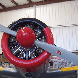 What a nose by Sandy Stevens Krassinger - Transportation Airplanes ( propellar, red, plane, wings, cowling,  )