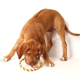 Loui  by Jenefer Zeitsch - Animals - Dogs Puppies
