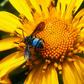 blue bee by Sonny Adi - Instagram & Mobile Android