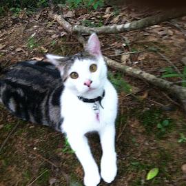 Spunkster by Dorothy Irwin - Animals - Cats Portraits ( cats, animals, hyper, spunky, cross-eyed cats )