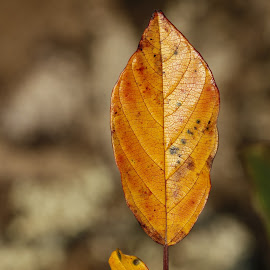 LEAF by Aida Neves - Nature Up Close Leaves & Grasses