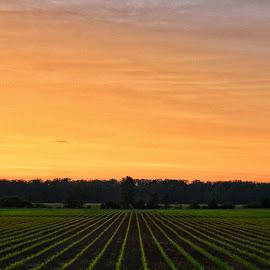 Farm Land by Kayla Smith - Landscapes Prairies, Meadows & Fields (  )