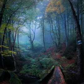 Stara Reka Forest by Nikolai Alexiev - Landscapes Forests ( fog, forest, mist )