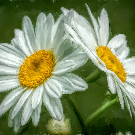 Painted Daisies by Chris Cavallo - Digital Art Things ( maine, digital art, daisies, artistic, daisy, digital painting, flowers )