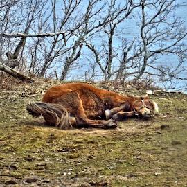 by John Geddes - Animals Horses