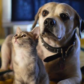 Big brother! by Benny Lopez - Uncategorized All Uncategorized ( kitten, cat, relaxing, dog,  )