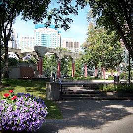 Olympic Plaza by Lena Arkell - City,  Street & Park  City Parks ( canada, park, olympics, calgary, city,  )