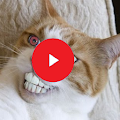 Free Funny Cat Videos APK for Windows 8