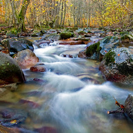 Come to Me by Siniša Almaši - Nature Up Close Water ( water, natural light, up close, reflection, stream, stone, forest, landscape, woods, photography, colours, dslr, nature, tree, autumn, cascade, trees, view, rocks, light, river )