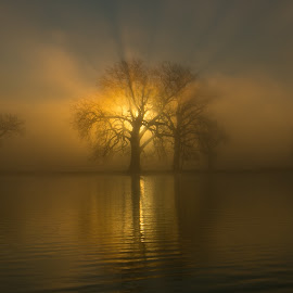 Flaming Tree by Mark Collins - Landscapes Sunsets & Sunrises ( water, sky, tree, fog, sun rise, dramatic, lake, light, rays, sun )
