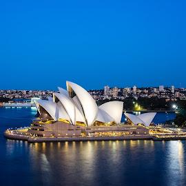 The Sydney Opera House by Jeremy Herbert - Buildings & Architecture Public & Historical ( sydney harbour, sydney opera house, city lights, night, landscape, nightscaoe, sydney )
