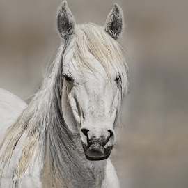 Portrait of a Horse by Sheen Deis - Animals Horses ( animals, horses, portraits )