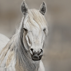 Portrait of a Horse by Sheen Deis - Animals Horses ( animals, horses, portraits,  )
