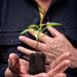 Plant of future by Sinisa Botas - People Body Parts ( lump, old, clump, holding, leaf, crop, nature, farmer, care, protection, agriculture, rural, country, palm, environment, food, sprout, cultivated, small, natural, senior, soil, plant, concept, development, clod, one, spring, investment, hand, farm, conservation, fresh, dirty, ecology, man, green, seed, growing, young, cereal, wrinkle, humus, organic, gardening, earth, harvest, elderly, growth )