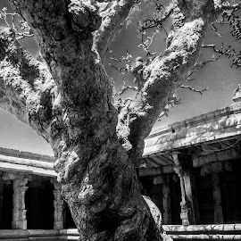 Shadows remain by Akashneel Banerjee - Instagram & Mobile Android ( temple, old, tree, landscape, shadows )