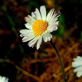 Flower by Ana Wisniewska - Instagram & Mobile Android