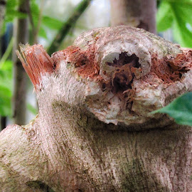 Bark Bear by Dave Walters - Nature Up Close Trees & Bushes ( face, wood, nature, tree, magical, natural,  )