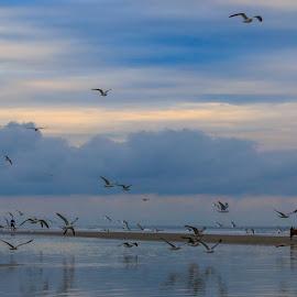 After Rain by Rananjay Kumar - Landscapes Weather ( #walking, #ocean, #birds, #canon, #rain, #shore )