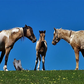 Horses by Sarah Harding - Novices Only Pets ( pet, horse, novices only, animal, foal )