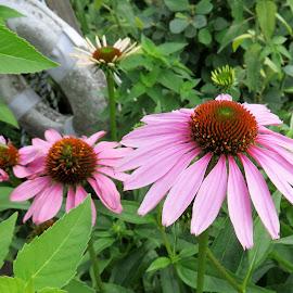 by Allen Wright - Flowers Flowers in the Wild