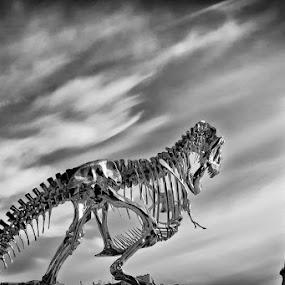 Predator by Rudi Yanto - Products & Objects Technology Objects ( paris, seine, dinosaur, anger, eiffel )
