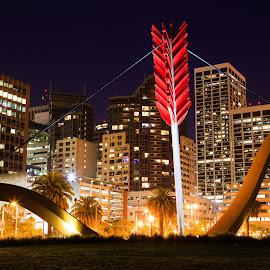 San Francisco by Gannon McGhee - City,  Street & Park  Night ( san, arrow, francisco, night, bow )