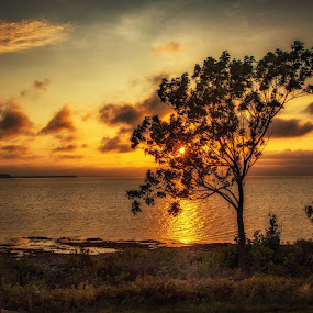 Atlantic Sunset by Rita Taylor - Landscapes Sunsets & Sunrises ( clouds, water, sunset, trees, sun,  )