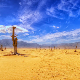 Once were warriors by Crighton Klassen - Landscapes Deserts ( drought, tree, dead, river, barren )
