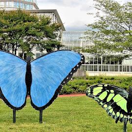 Butterflies by Allen Wright - Artistic Objects Still Life