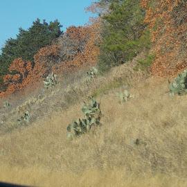 by Kat Tuck - Landscapes Prairies, Meadows & Fields ( roadways, texas )