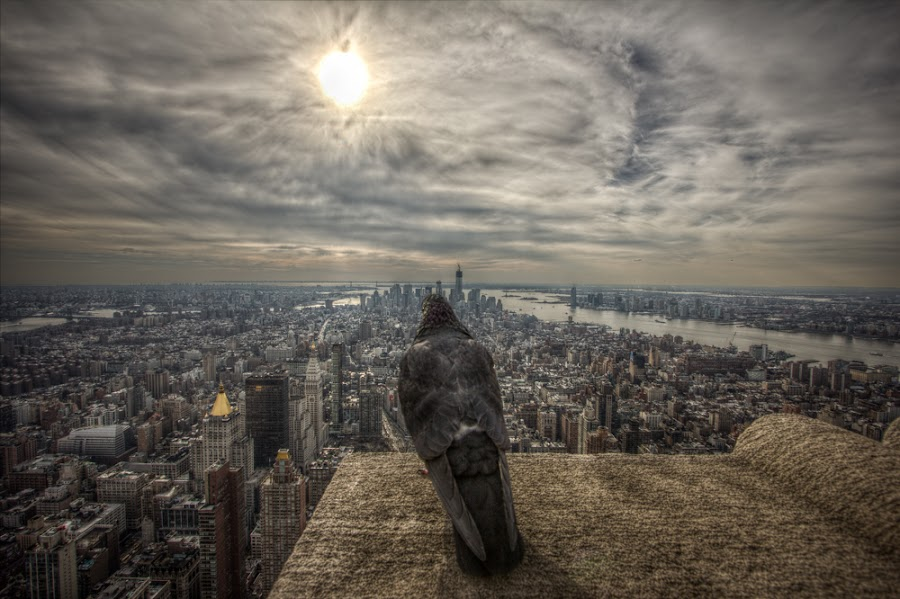 New York and it's watcher. by Robert Harmon - City,  Street & Park  Skylines ( skyline, bracketed, hdr, buildings, architecture, new york, birds )