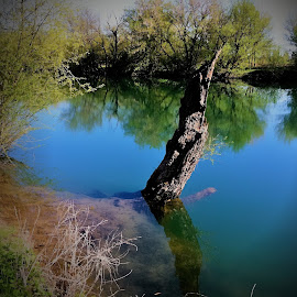 VODENO DRVO by Dunja Petrović - Nature Up Close Water