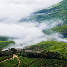 Foggy Bottom by Vinod Kalathil - Landscapes Mountains & Hills ( india, kerala, landscape, munnar )
