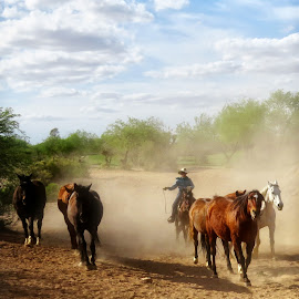 Ranch Horses by Nancy Young - Animals Horses ( cowboy, horses, riding, dust )