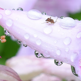 Water droplets   by Zhenya Philip - Nature Up Close Water