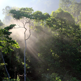 In the Morning at Boliohuto by Ronny Buol - Nature Up Close Trees & Bushes ( gorotalo, boliohuto, indonesia )