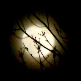 Winter Moon 5 by RMC Rochester - Digital Art Abstract ( abstract, moon, tree, nature, night )
