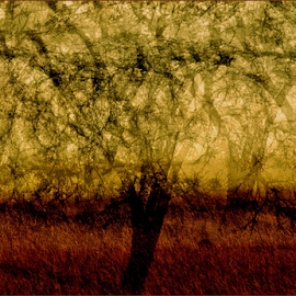 Forest Sunset by Kittie Groenewald - Digital Art Abstract