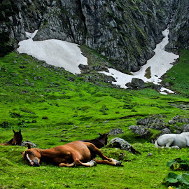 Magic Moment . by Comsa Bogdan - Animals Horses ( rasnov, europe, mountain, horses, green, horse, malaiesti, romania, relaxation, landscape, photography, bucegi, brasov, love, mountains )