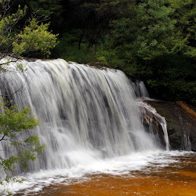 Wentworth Falls by Mandy Harvey - Landscapes Waterscapes